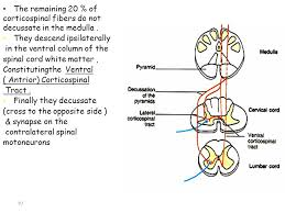 Pyramids Of The Medulla Physiology Of Motor Tracts Ppt Video Online Download