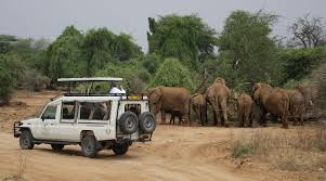 african safari car top 10 reason why you should go on an african safari