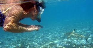 Washington snorkeling images Teen killed by shark while snorkeling at resort breaking news jpg