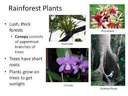 Adaptations Of Tropical Rainforest Plants - biomes earth has seven major biomes marine tropical rain forest