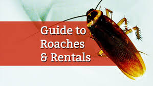 How To Get Rid Of Roaches In The Bathroom How To Kill Roaches In A Rental Property