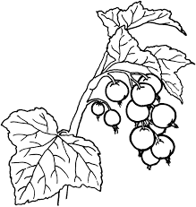 fruit and berries coloring pages 21 fruit and berries kids