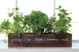 51 indoor herb garden wall an indoor herb garden wall garden