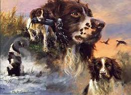 springer spaniel christmas cards in dog horse and country