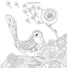 252 coloriage oiseaux images colouring