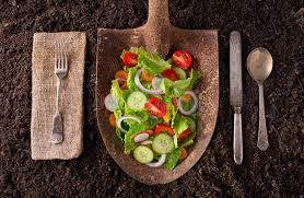 farm to table concept locally grown garden salad on rusted shovel stock image image of