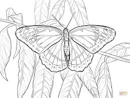 viceroy coloring free printable coloring pages