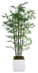 tall bamboo tree in planter decorative planters bamboo plants