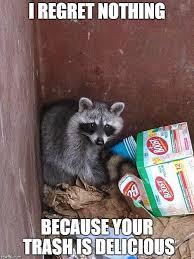 Meme Trash - raccoon in garbage imgflip