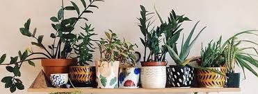 Home Decor For Apartments 60 Best Indoor Plants Decor Ideas For Apartment And Home Air