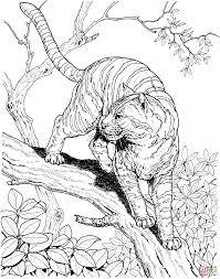 tiger ausmalbilder 04 zentagle pinterest coloring