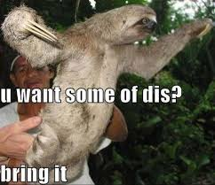 Come At Me Meme - come at me bro sloth edition sloths know your meme