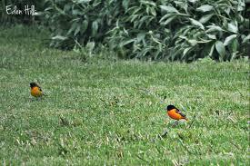 pretty birds eden hills