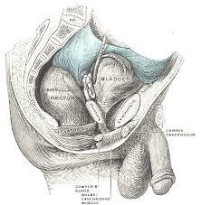 Right Side Human Anatomy Pin By Masa Hito Ko On Illustrations Anatomy Of The Human Body