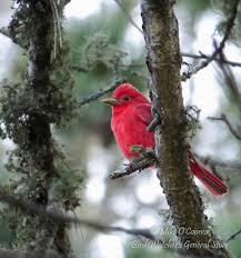 bird watcher u0027s general store orleans ma