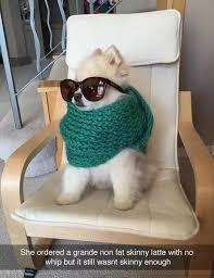 Dog With Glasses Meme - fabolous dog meme by soydolphin memedroid