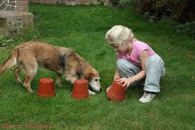 The Bathroom Game by Dog Playing Flowerpot Treat Seek Game Photo Wp26115