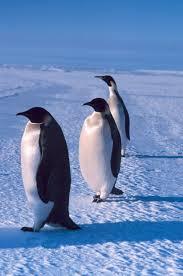 marine mammals and penguins marine science today