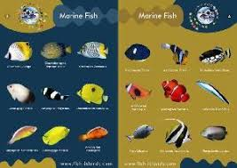 ornamental fish wholesale page 1 products photo catalog