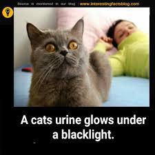 Cat Facts Meme - cat urine interesting facts facts pinterest cat urine