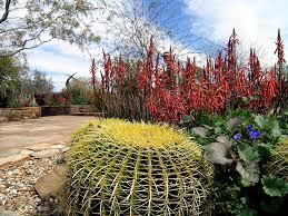 roland beginner arizona backyard landscaping pictures az spiders