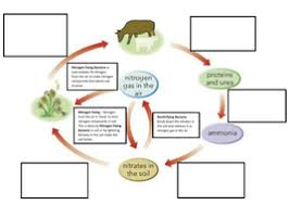 nitrogen cycle full lesson by joeshilly93 teaching resources tes