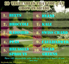 best vegetables to grow in shade 3 6 hrs of sun minneapolis