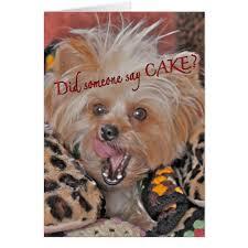 cute funny happy birthday card dog yorkie design zazzle com