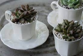 the complete guide to growing succulents as houseplants