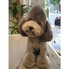 haircutsfordogs poodlemix poodle haircuts google search animals kids pinterest