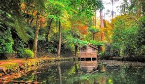 Beautiful Cottage Forest Reflection Cottage Water Trees Forest Beautiful Trial