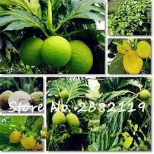 get cheap plant tropical aliexpress alibaba