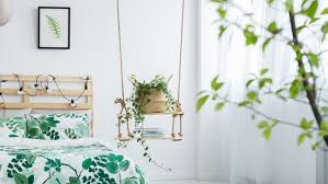biggest house plants 6 house plants to help you sleep better bt