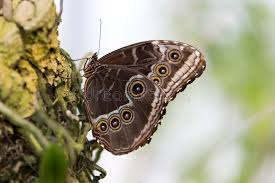 butterfly with wings closed stock image image of antennae