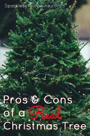 the pros and cons of a real christmas tree sparkles of sunshine