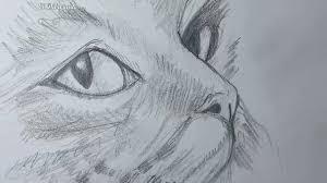 imagenes a lapiz de gatos como dibujar un gato paso a paso el dibujante youtube