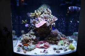 Aquascaping A Reef Tank Winterfell Reef A 100 Gallon Journey Large Reefs Nano Reef