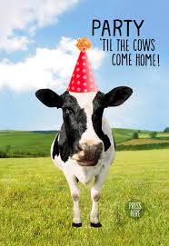 cow greeting cards cow birthday images search