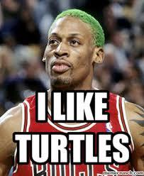 I Like Turtles Meme - like turtles