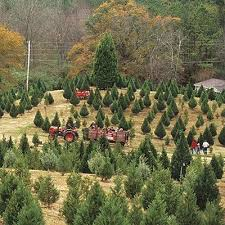 23 best choose u0026 cut your own christmas tree images on pinterest