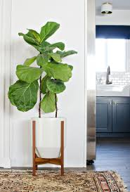 Plants For Dark Rooms by My Fiddle Finally Has A Pot The Vintage Rug Shop The Vintage Rug