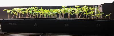 shop light for growing plants diy grow lights easily grow garden seedlings microgreens and more