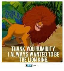 Lion King Meme - thank you humidity ialways wanted to be the lion king meme on me me