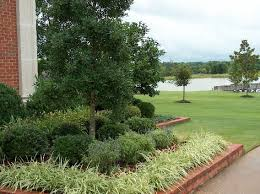 triyae com u003d easy low maintenance backyard landscaping ideas
