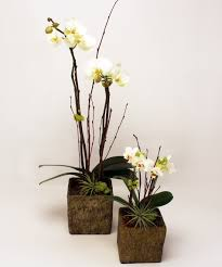 Orchid Delivery Zen Orchid San Mateo Same Day Plant Delivery Ca Ah Sam Florist