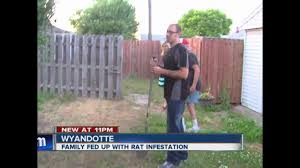wyandotte man says rat problem is out of control in his suburban