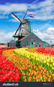 traditional dutch windmill zaanse schans dutch stock photo