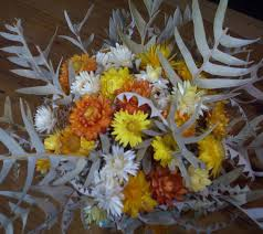 society for growing australian native plants paper daisies in floral arrangements mallee native plants