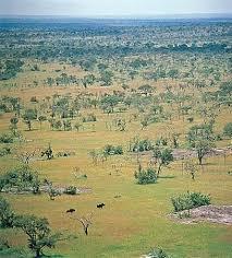 Tropical Savanna Dominant Plants - savanna ecological region britannica com