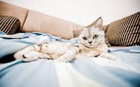 bed sweet cat 6905015
